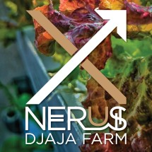 X-Nerus Djaja