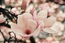 Magnolia Traincase
