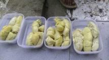 aries durian