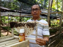 madu asli hutan kalimant