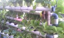 Joyful Farm