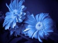 Blue-Shop