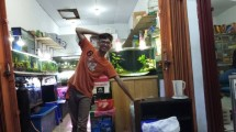 Igun Callysta Aquarium