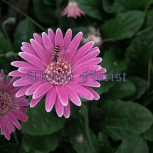 Thania Florist