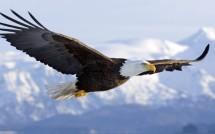 Eagle15