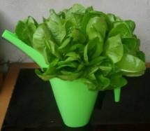 saladcorner