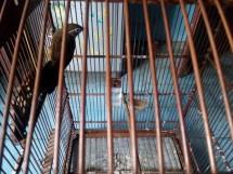 Joevan Pets Birds