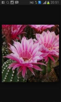 yi wi cactus & suculent
