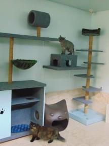 cakaran kucing