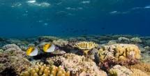 lautanbiru
