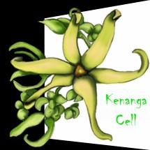 kenanga cell