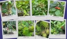 Floranesia nursery