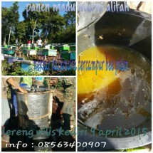 alifah pure honey