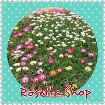 Rosetta Shop