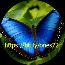 Ones Online Store
