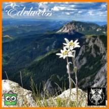Edelweiss Azure