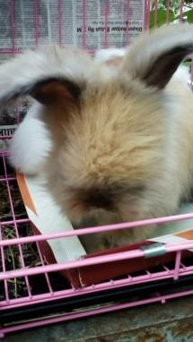 HN Rabbit