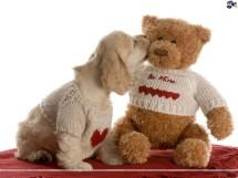 Teddy b34r Shop