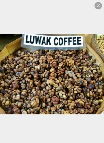 luwak coffee shop