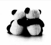 Kaki Panda