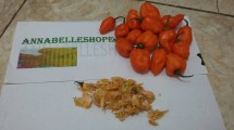 Annabelleshope