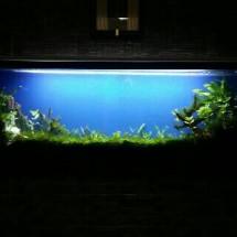 Callysta Aquarium