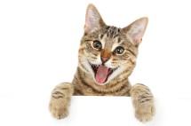 Makanan Kucing Bahagia