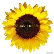 blacktruffle