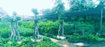 rumah_pohon___abraham