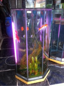 Trampil Aquarium