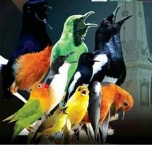 pinneaple bird community