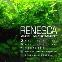 Renesca Aquascape