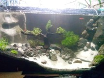aquascape 46