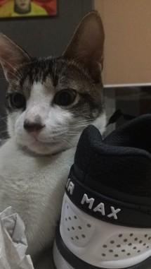 Sepatu Bekas Bane
