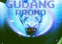 Gudang Promo