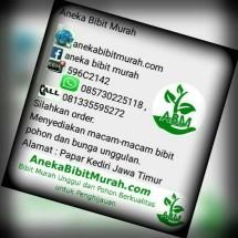 """Aneka Bibit Murah """"ABM"""""""