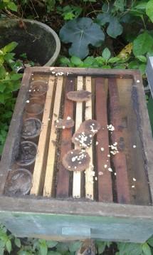 peralatan lebah