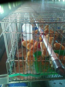 Hei Day Poultry Shop