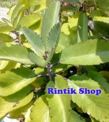 Rintik Shop