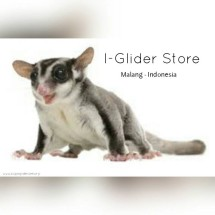 iGlider Store