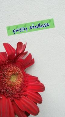 gassy etalase