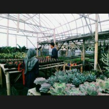 Green Garden 17