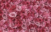 Roses Bandung
