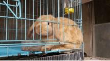 Cikunir Rabbit Store