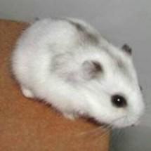 Hamster Tangerang
