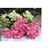 HaN florist