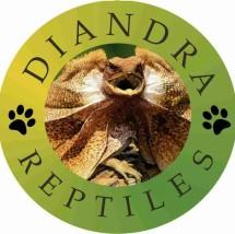 Diandra Reptiles