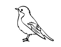 Canary Shop