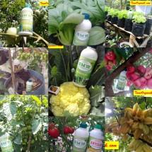 Bertani Sayuran II