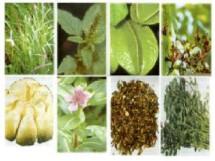 Herbal Semarang